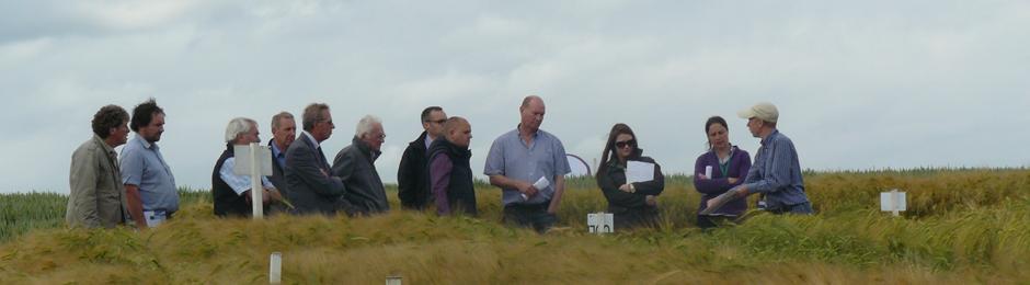 Barley field Demonstration