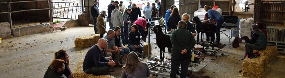 Zwartble Sheep Soceity trimming demonstration